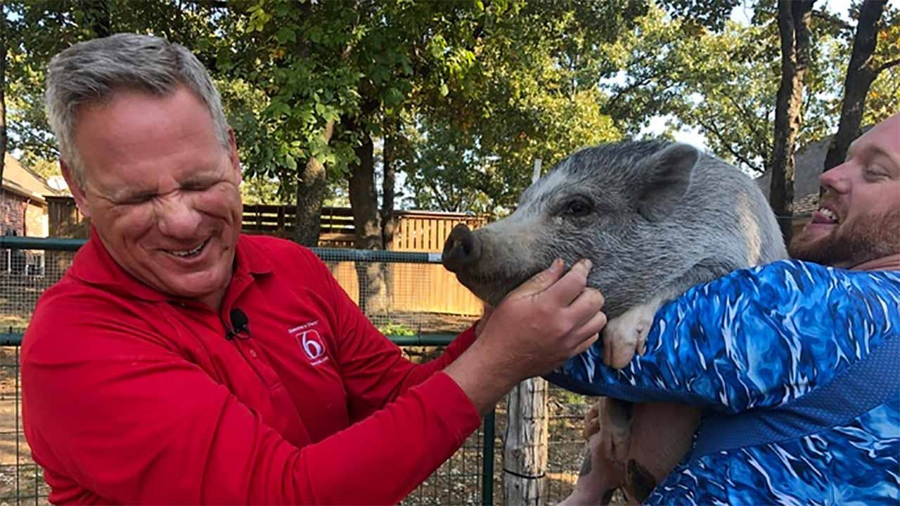 It was payback time for pigs everywhere when News On 6 anchor Craig Day had to pucker up and kiss Oreo The Pig.