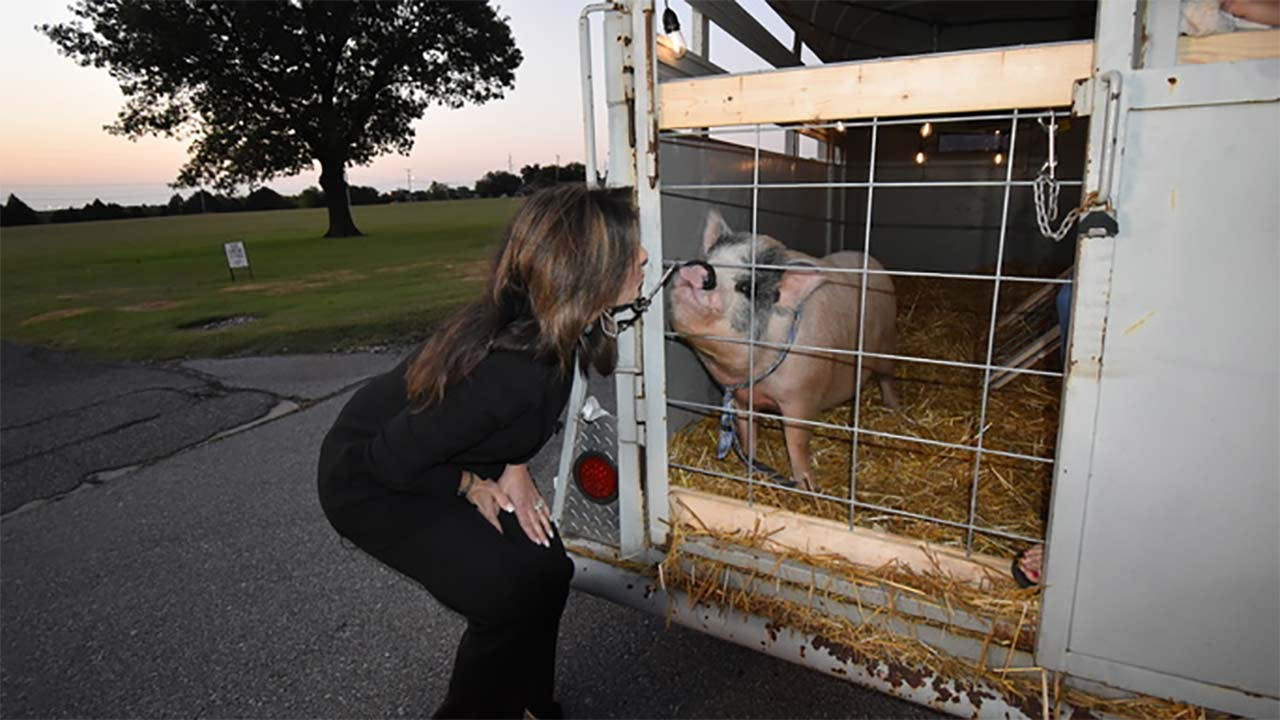 News 9's Robin Marsh kissed Clark The Pig after viewers donated nearly $3,400 in her name to benefit Food For Kids.
