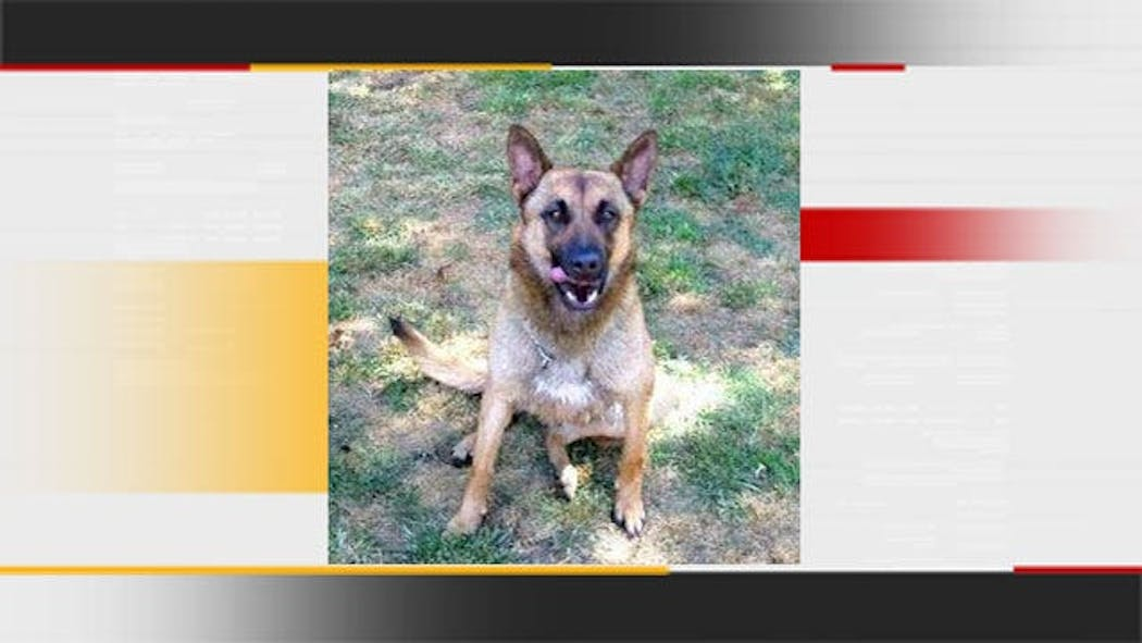 Bartlesville Police Dog Falls Victim To Summer Heat