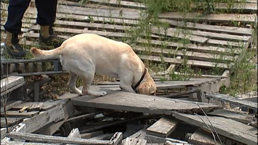 Rescue Dogs Get Disaster Training In Tulsa