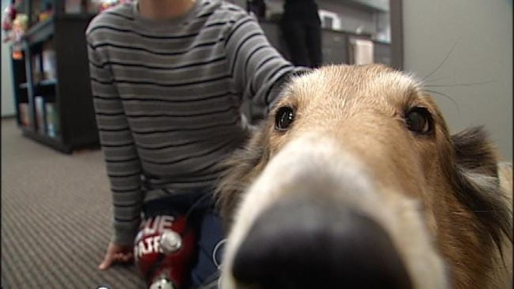 Disabled Therapy Dog Provides Comfort, Love To Tulsa Kids