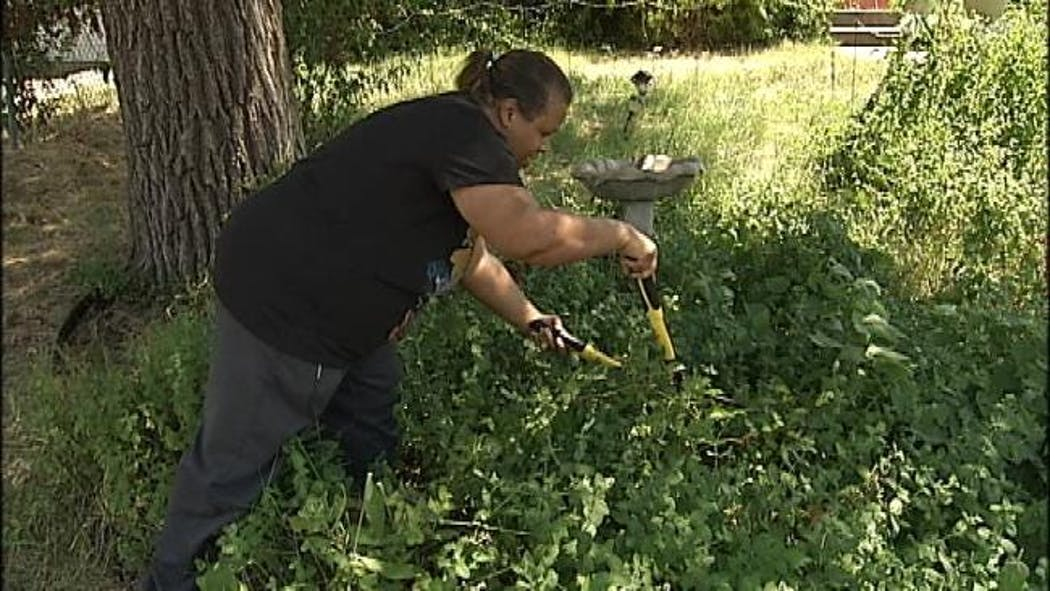 Support Blooms For Tulsa Woman Who Said The City Cut Down Her Edible Garden