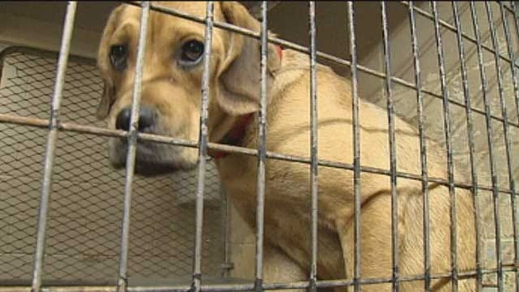 Norman Animal Welfare Working To Reunite Lost Pets With Families