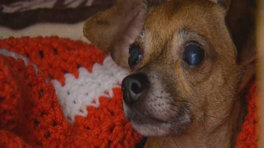 Experts Track Down Missing OKC Rescue Dog