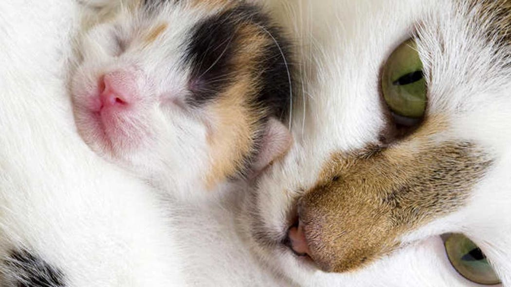 2 Pet Cats Test Positive For Covid 19 In New York Usda Says