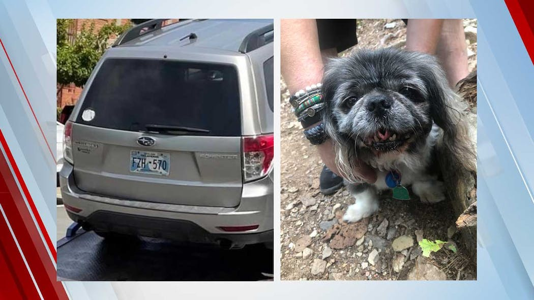 Stolen Car and Disabled Dog